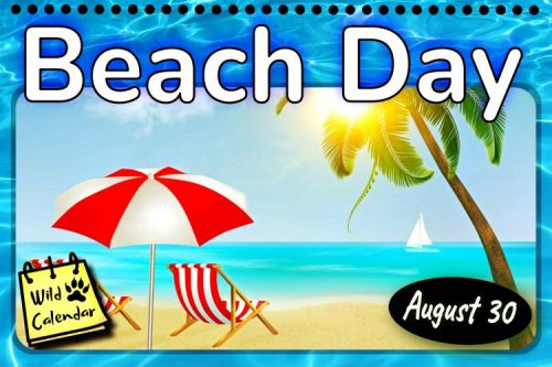 Read more about the article Beach Day