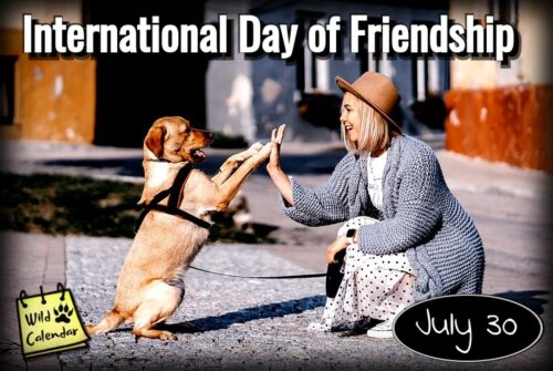 Read more about the article International Day of Friendship