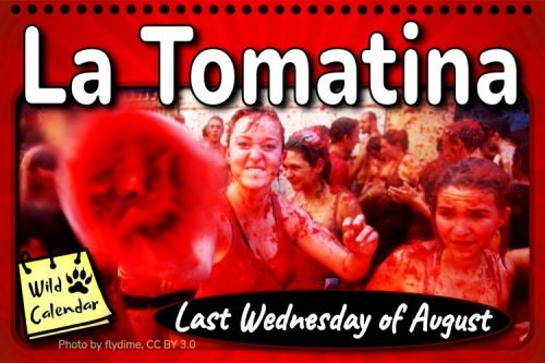 Read more about the article La Tomatina