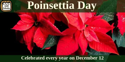 Read more about the article Poinsettia Day