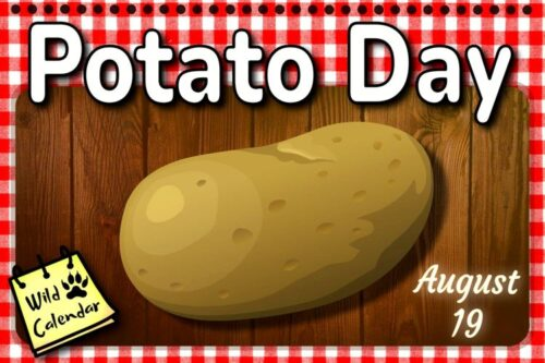 Read more about the article Potato Day