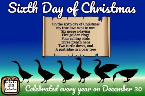 Read more about the article Sixth Day of Christmas