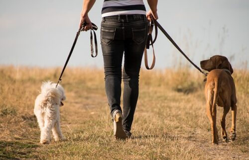 Read more about the article Take Your Pants for a Walk Day