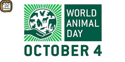 Read more about the article World Animal Day