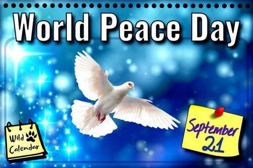 Read more about the article World Peace Day