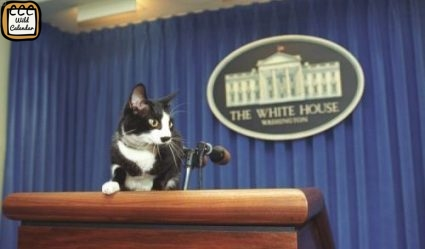 Read more about the article Cats for President Day