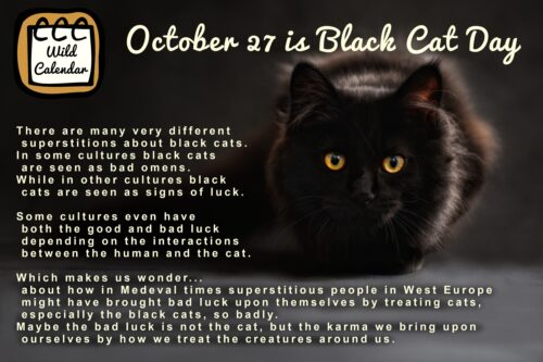 Read more about the article Black cat appreciation through time