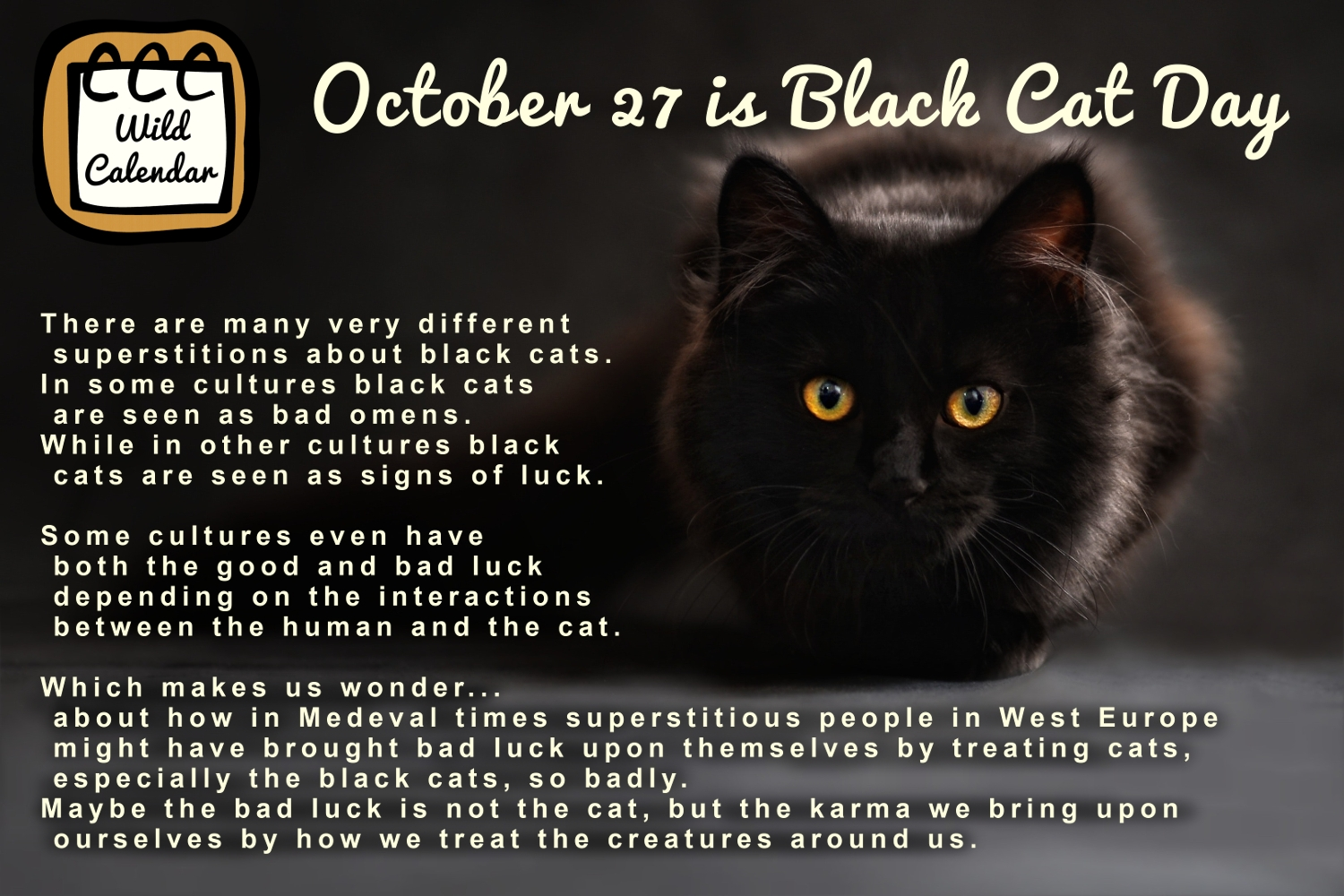 You are currently viewing Black cat appreciation through time