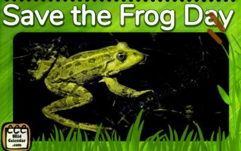 Save the Frog Day