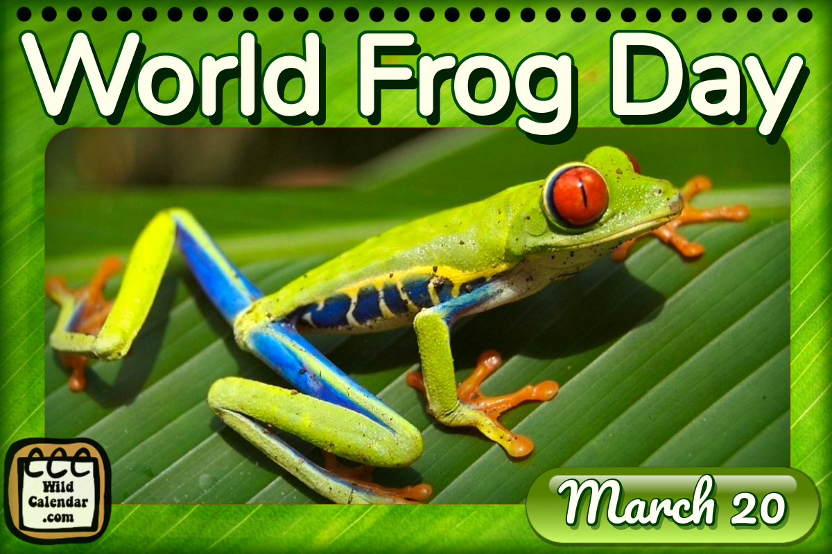 World Frog Day
