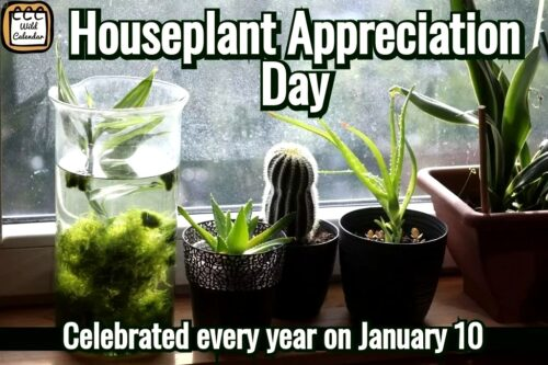 Read more about the article Houseplant Appreciation Day