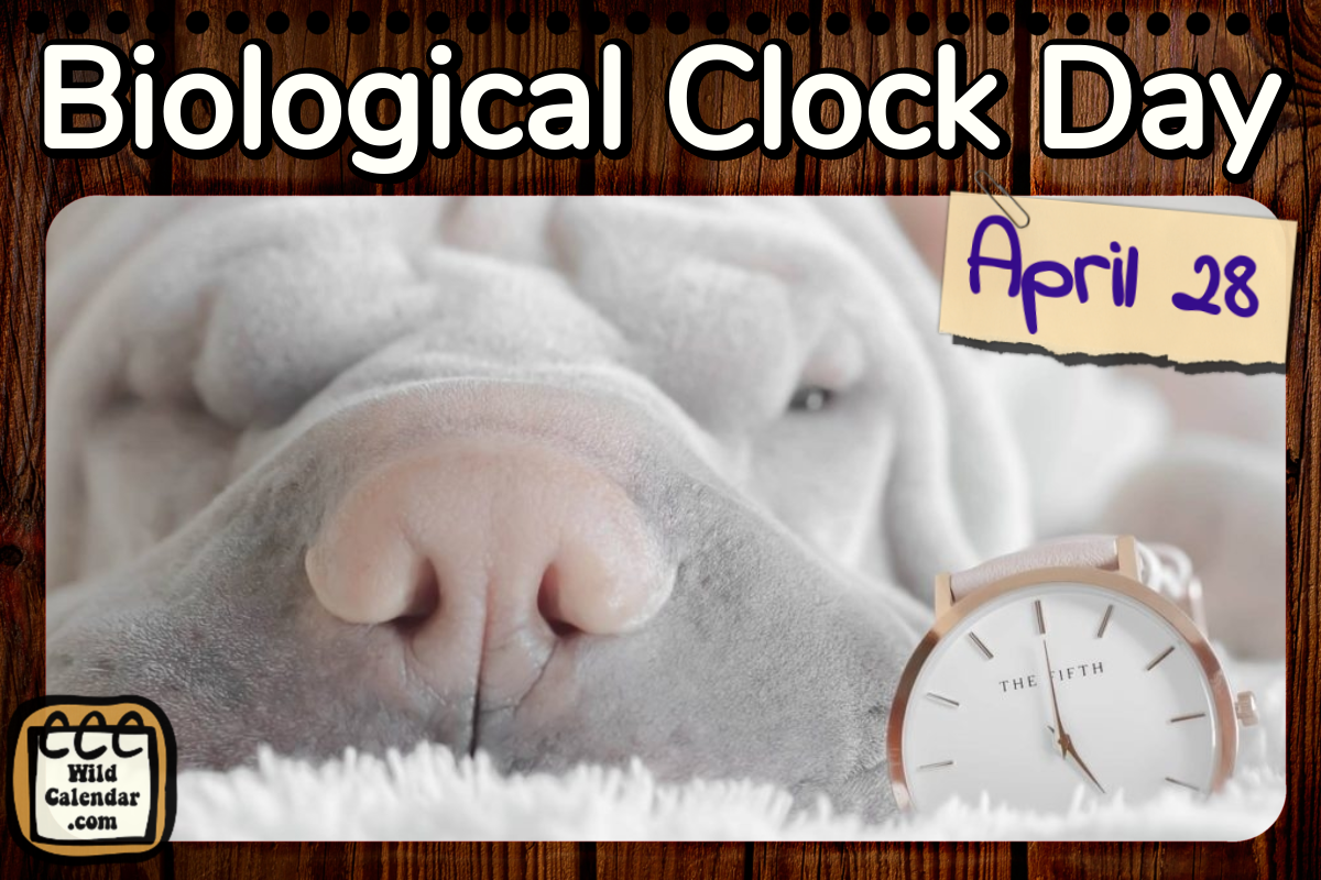 Biological Clock Day