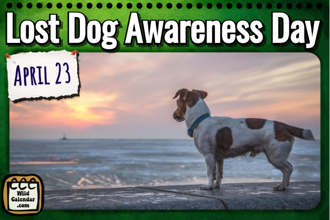 Lost Dog Awareness Day