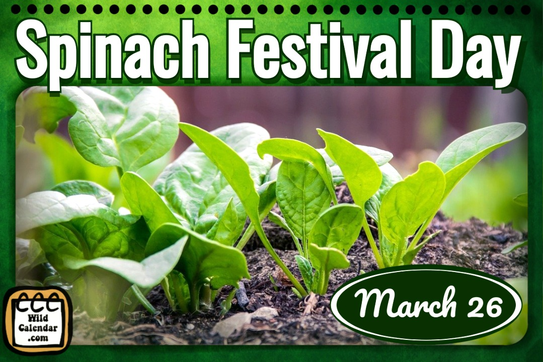 Spinach Festival Day