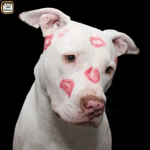 Read more about the article Pit Bull Awareness Day
