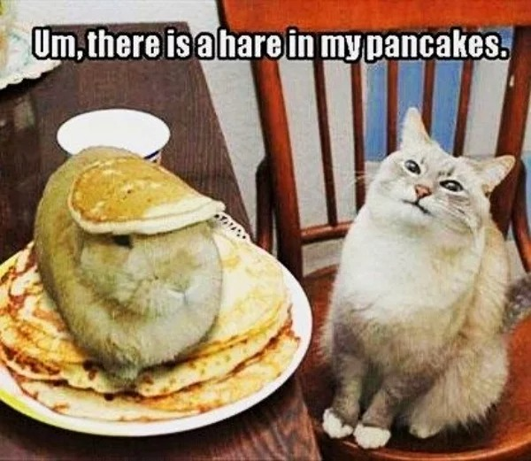 kitty sees a hare in pancakes