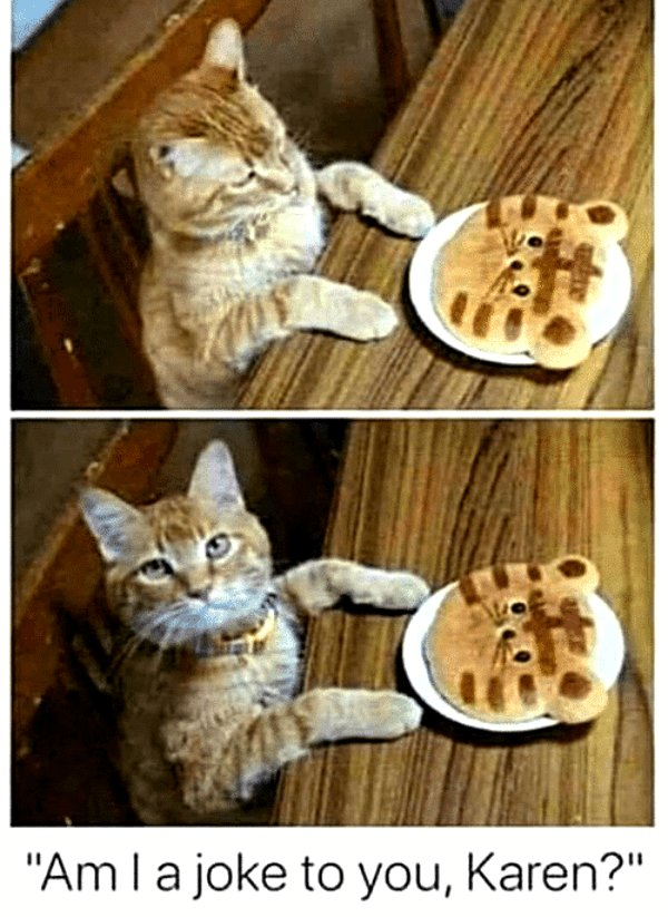 this pancake kitty is an insult!