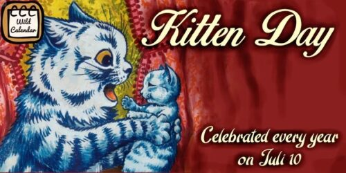 Read more about the article Kitten Day