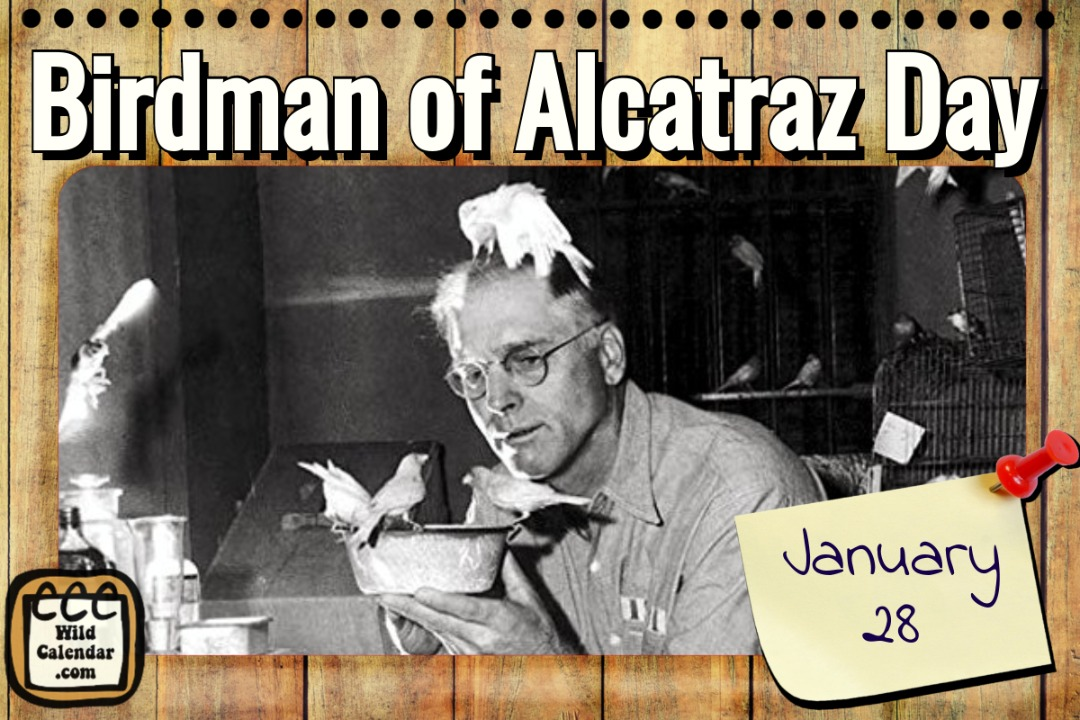 Birman of Alcatraz Day
