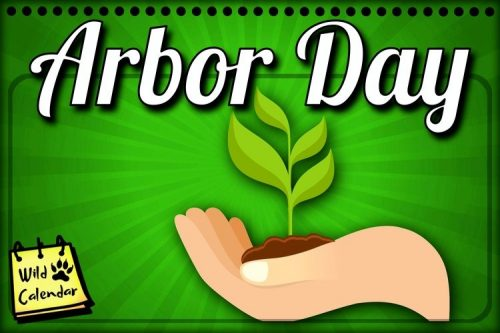 Read more about the article Brazil Arbor Day