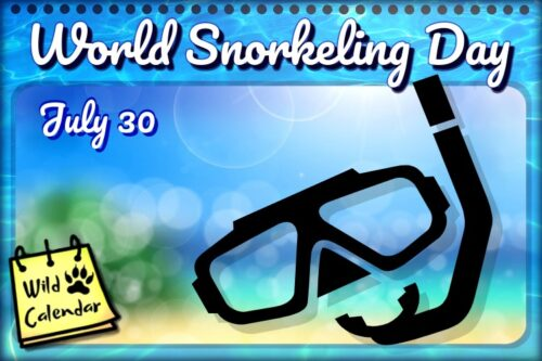 Read more about the article World Snorkeling Day